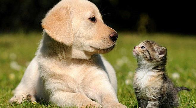 fourpaws.Tax on Animal husbandry-InMarathi02com