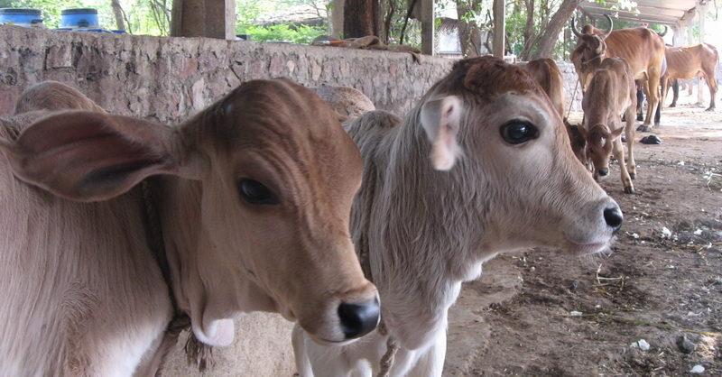 anima-slaughter-ban-inmarathi01
