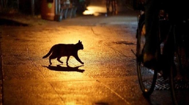 cat-InMarathi