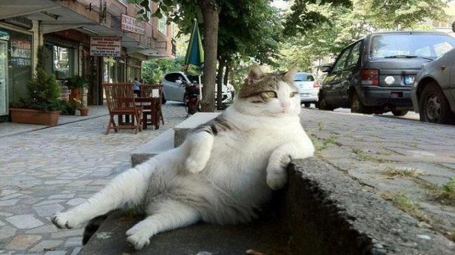 cat-istanbul-marathipizza
