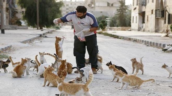 cats-istanbul-marathipizza