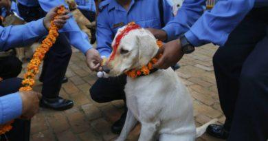 nepal-dog-worship-marathipizza