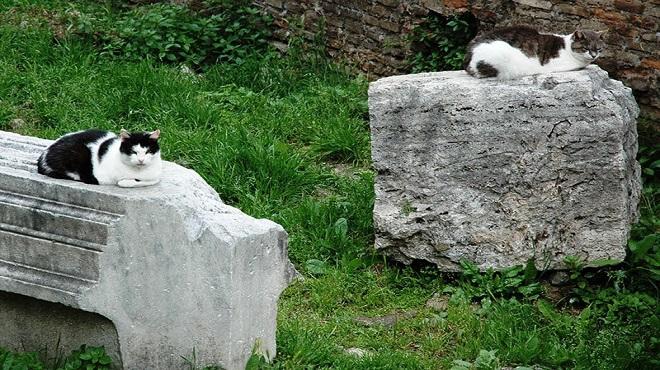 torre-argentina-cats-marathipizza