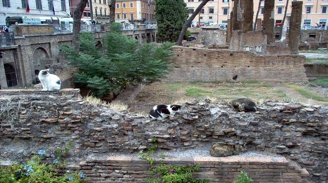 torre-argentina-cats02-marathipizza