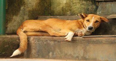 indian dog breed-inmarathi
