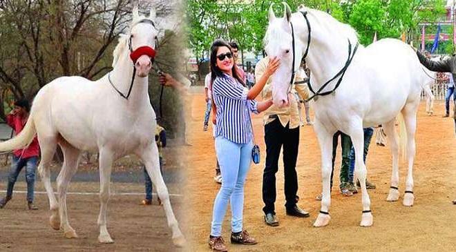 Padma Horse inMarathi