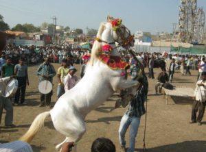 Sarangkheda horse festival.Inmarathi