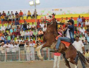 Sarangkheda horse festival.Inmarathi3