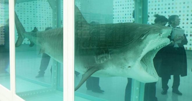 dead shark inmarathi