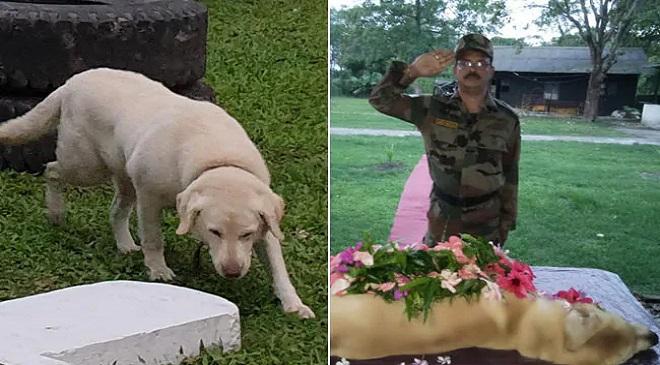 dog death in army InMarathi