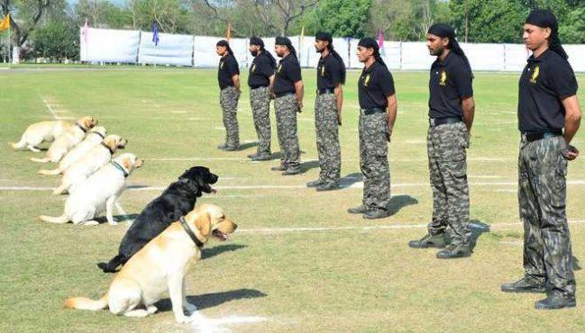 dog trainning InMarathi