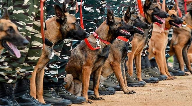 dogs-training_2 InMarathi