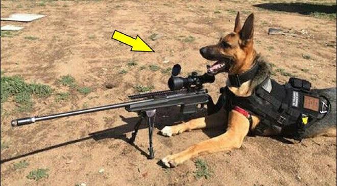 dogs-training_3 InMarathi