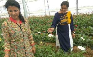 hariyana girls-inmarathi01