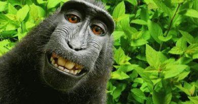 naruto monkey-inmarathi