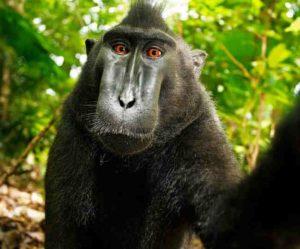 naruto monkey-inmarathi01