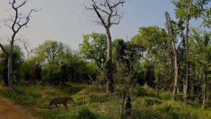 tadoba safari-inmarathi