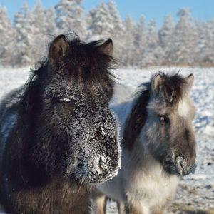 Worlds Coldest Village Oymyakon-inmarathi21