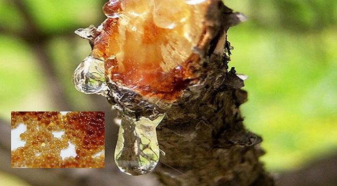 tree excrete 2 InMarathi