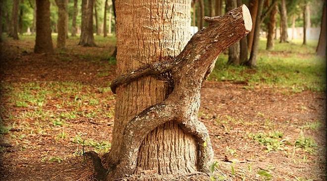 tree excrete 3 InMarathi