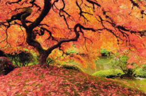 tree-excrete-inmarathi