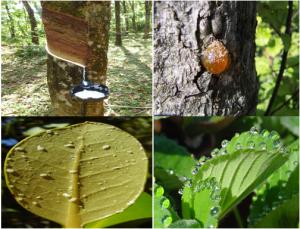 tree-excrete-inmarathi01