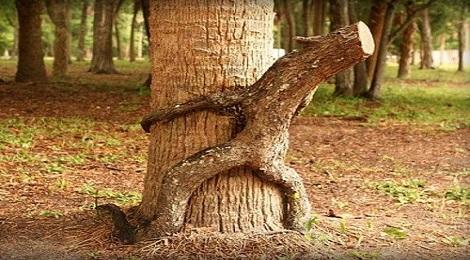tree-excrete-inmarathi05