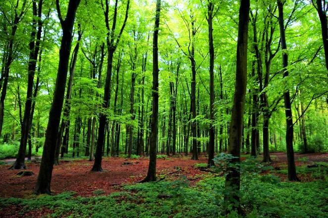 tree-excrete-inmarathi06