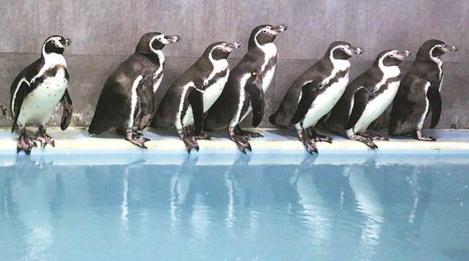 Penguin facts.Inmarathi