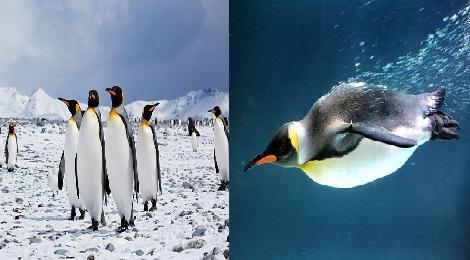 Penguin facts.Inmarathi00