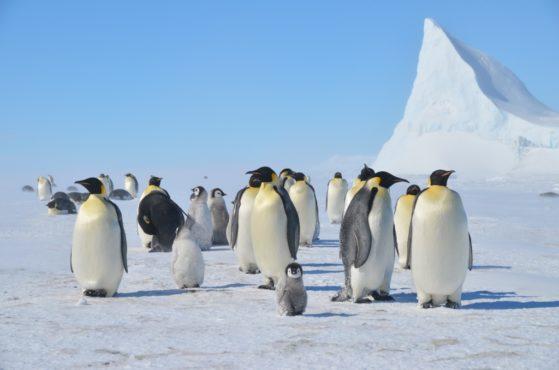 Penguin facts.Inmarathi4