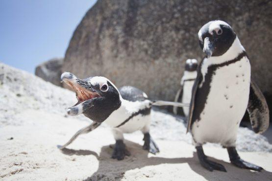 Penguin facts.Inmarathi5