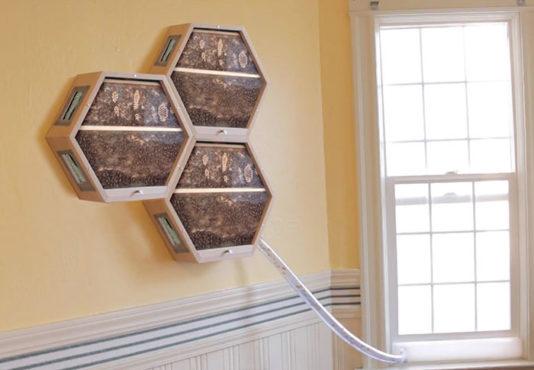 indoors-outdoors-bee-hives-inmarathi