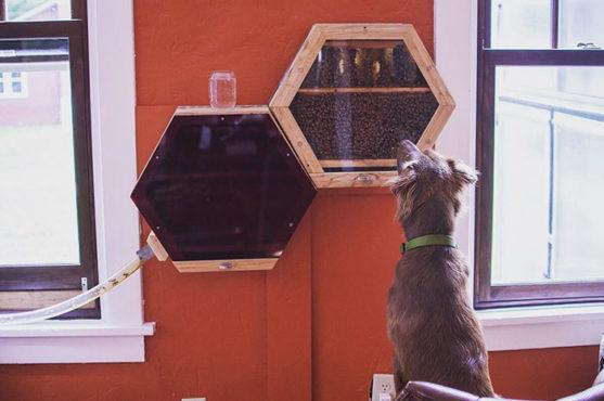 indoors-outdoors-bee-hives-inmarathi03