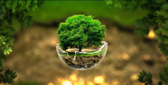 tree-inmarathi02