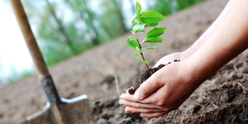 tree-plantation-inmarathi