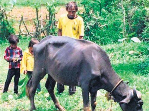 bhalaji-damor-inmarathi