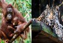 एखाद्या प्राण्याची प्रजाती नामशेष होण्याच्या मार्गावर आहे हे कसे ठरवले जाते? जाणून घ्या