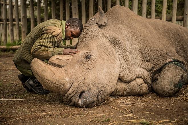 rhino-sudan-inmarathi