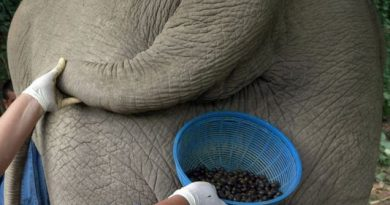 How the worlds most expensive coffee is made.Inmarathi1