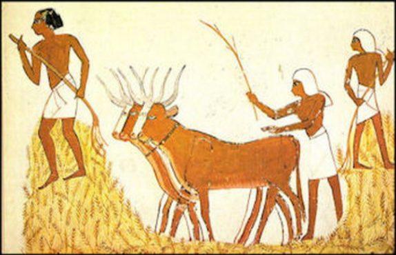 agri-inmarathi