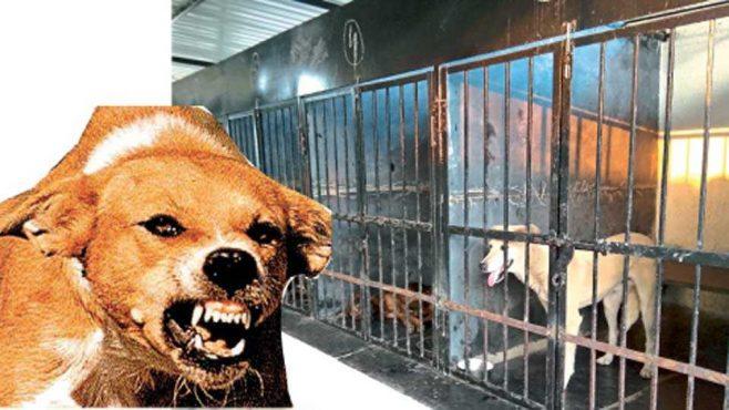 dog-inmarathi