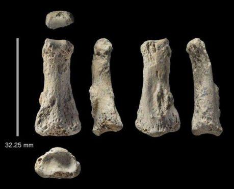 human fossil-inmarathi
