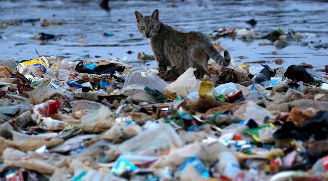 Plastic-Pollution 1 InMarathi