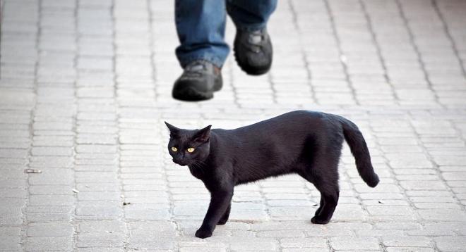 black cat inmarathi