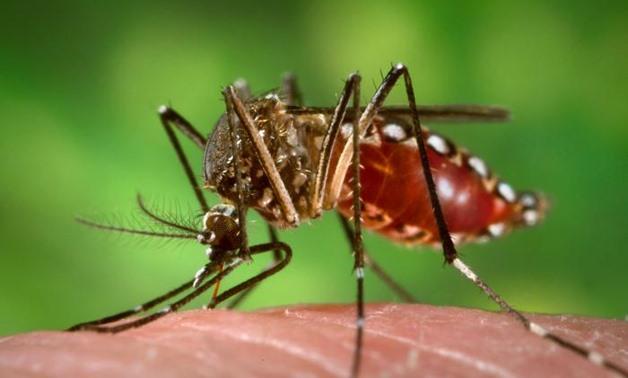 dengue-inmarathi