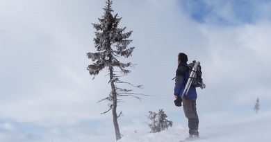 oldest-tree-old-tjikko-sweden-inmarathi02