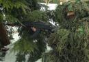 पाकिस्तानी आर्मीचं नवं संकट : हिट सिग्नेचर लपवणारे नवे आधुनिक सूट