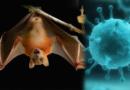 हे आहेत जगभरात लाखो लोकांचा बळी घेणारे काही घातक व्हायरस !
