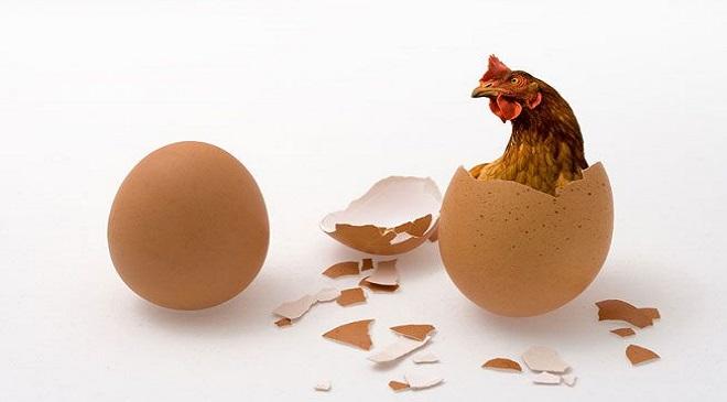eggs-inmarathi03